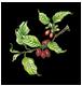 Logo Il Corniolo